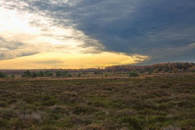 Cuxhavener Heide