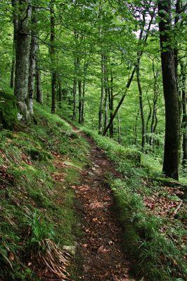 Auf Waldwegen