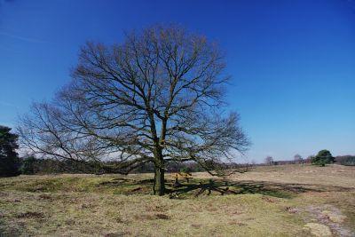 Haltener Heide