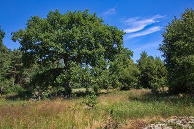 Naturreservat Nötön Aspergarden